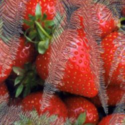 Pure ICE Strawberry