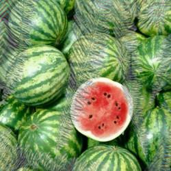 Pure ICE Watermelon