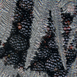 PureICE Blackberry