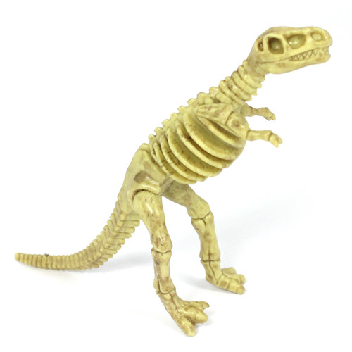 Dinosaur Small Skeleton, Counting and Matching Set of 6