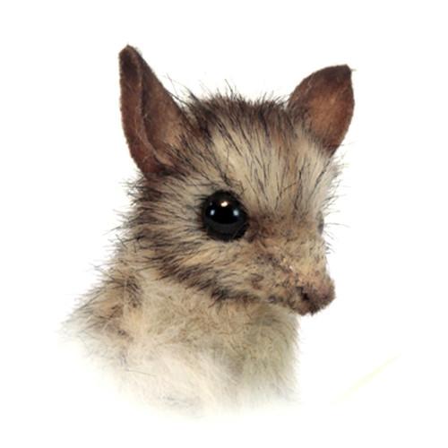 Face Detail, Hansa Leadbeater Possum Soft Toy Animal Grey 11cm