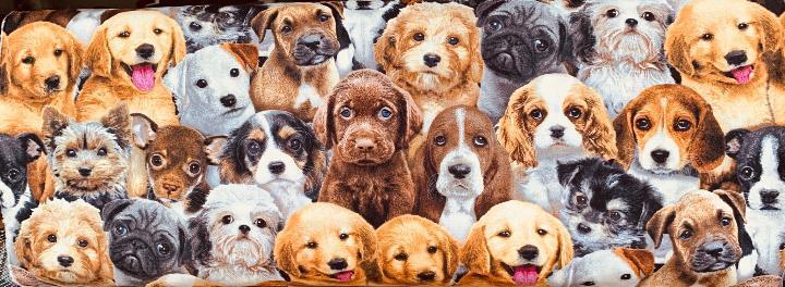 puppy-party.jpg