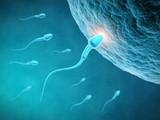 Male Fertility Heatlh