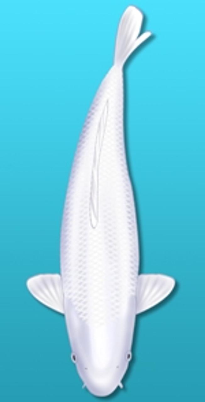 White Koi