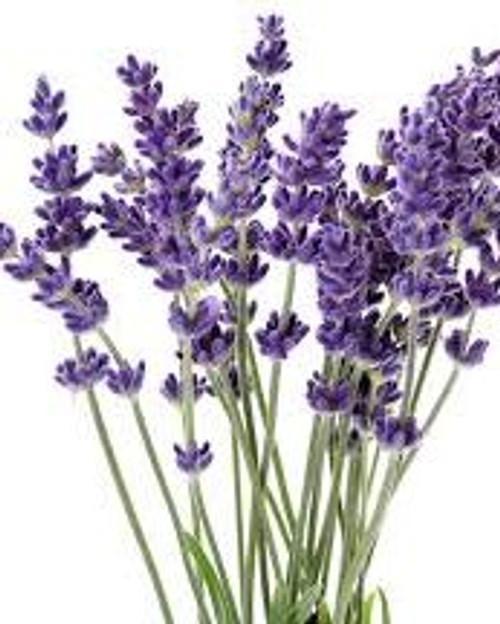 Floral Waters – Lavender