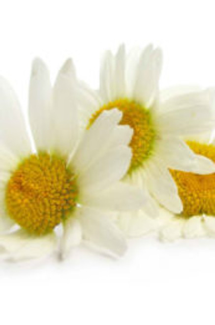 Natural Chamomile Extract