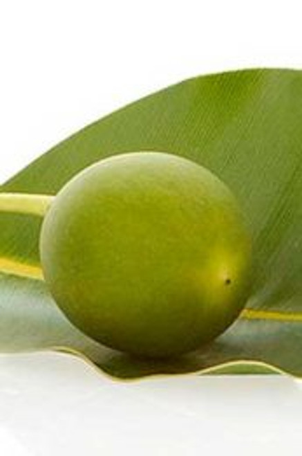 Tamanu Oil – Pure Natural Base Carrier Oil