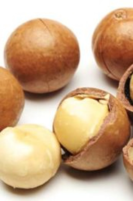 Macadamia Oil – Pure Natural Base Carrier Oil