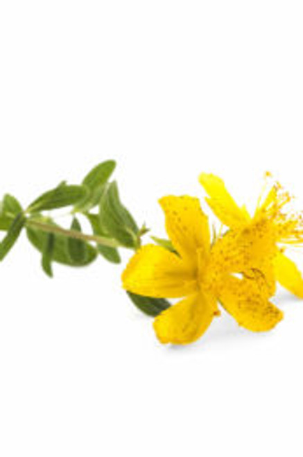 Pure Natural Base Carrier Oil – St John's Wort Infused Oil