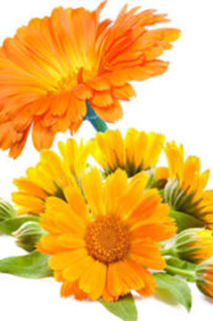 Natural Base Carrier Oil – Calendula Infused Oil