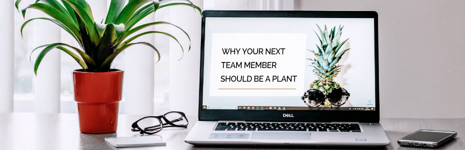 Why Your Next Team Member Should Be a Plant.