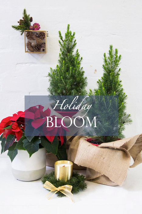 Holiday Flowers Are Here