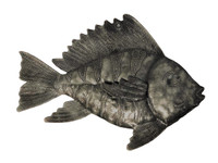 Under the sea fish collection