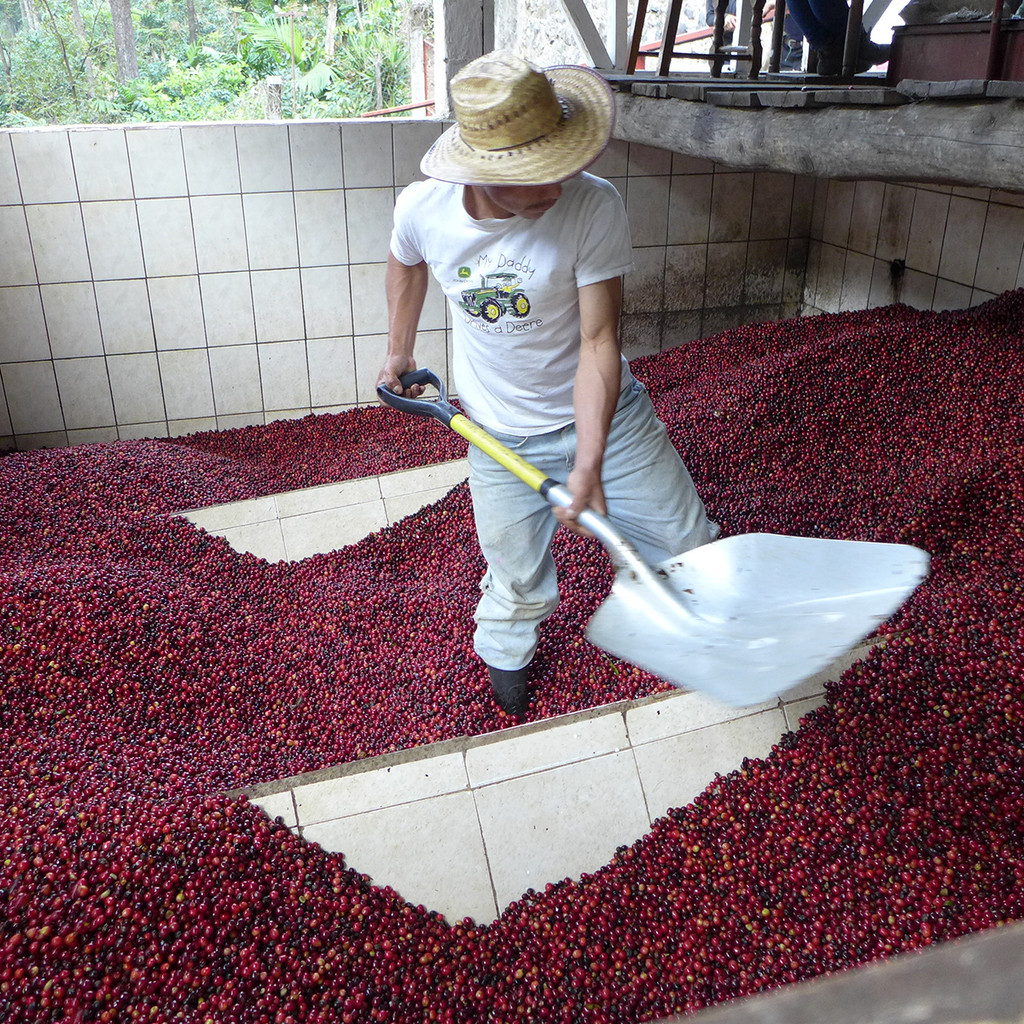 La Bolsa - La Huerta