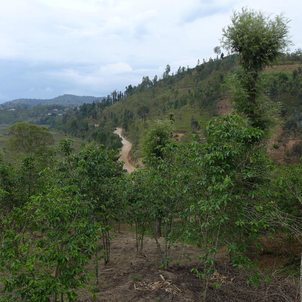 Nyarusiza