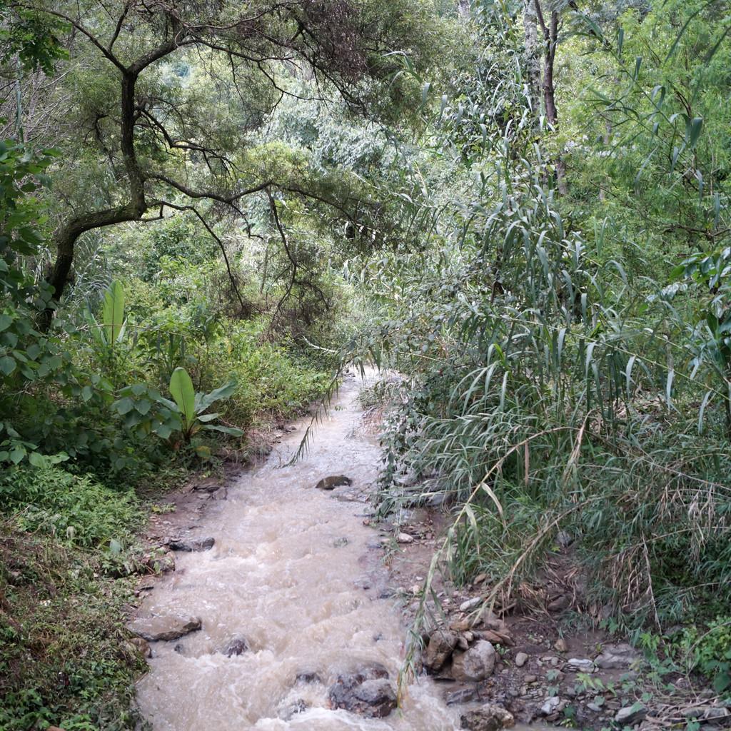 San Pedro Necta