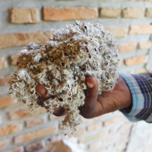 Shamba Mushroom Project