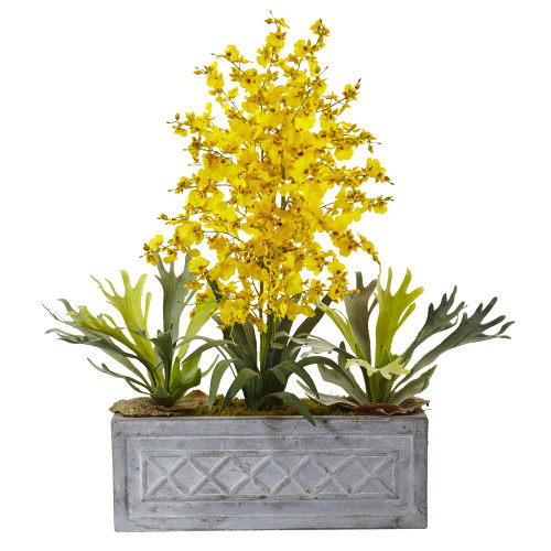 Dancing Lady and Staghorn in Stone Planter