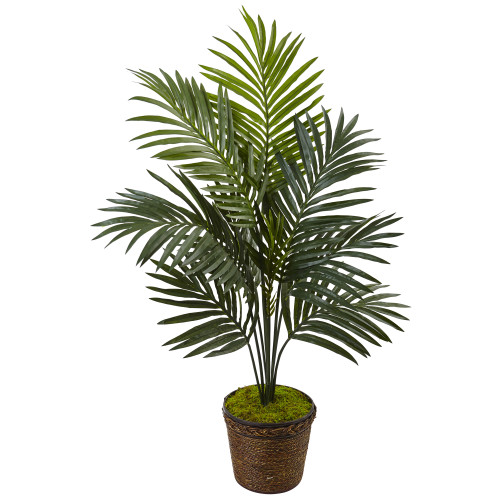 4' Kentia Palm Tree in Coiled Rope Planter