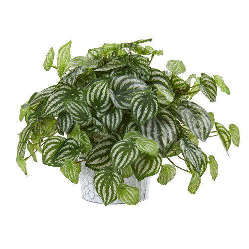 """13"""" Watermelon Peperomia Artificial Plant in Embossed White Planter (Real Touch)"""