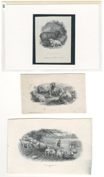 3 Sheep Related Die Proof Vignettes