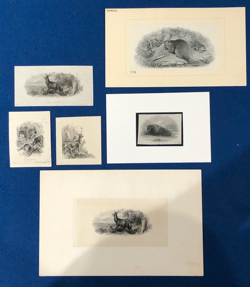 6 Animal Related Die Proof Vignettes