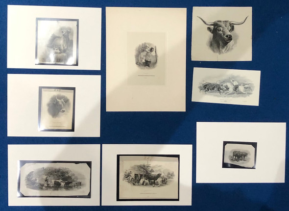 8 Cattle Related Die Proof Vignettes