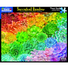 Succulent Rainbow Jigsaw Puzzle box
