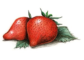 apr-strawberry-drawing.jpg