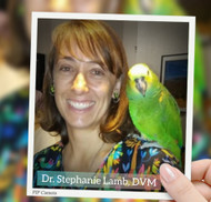 Parrot Dietary Modifications and Tea to Improve Health in Iron Storage Disease