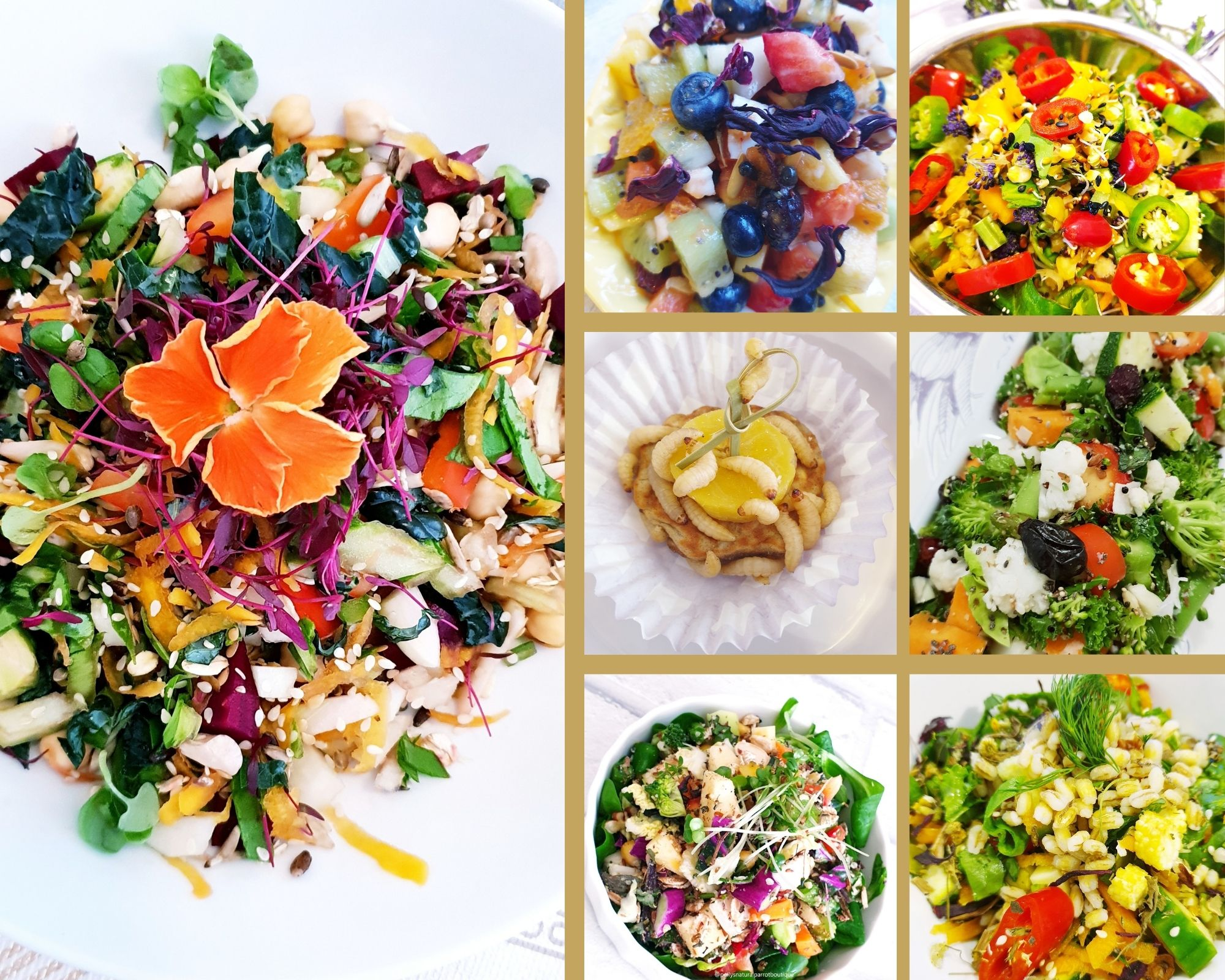 a-parrot-s-healthy-meal-planner-recipes.jpg