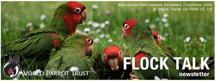 flock-talk-front.jpg