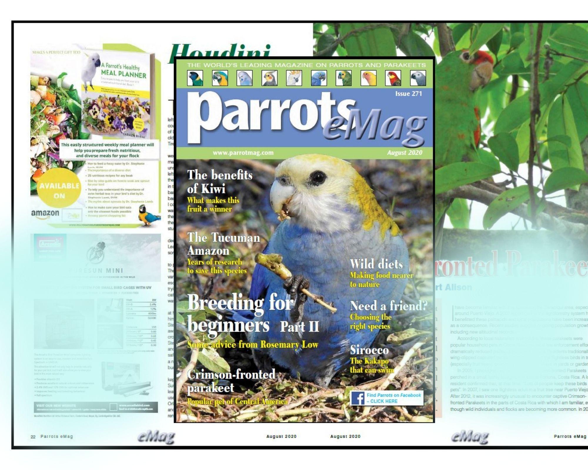 parrot-magazine-.jpg