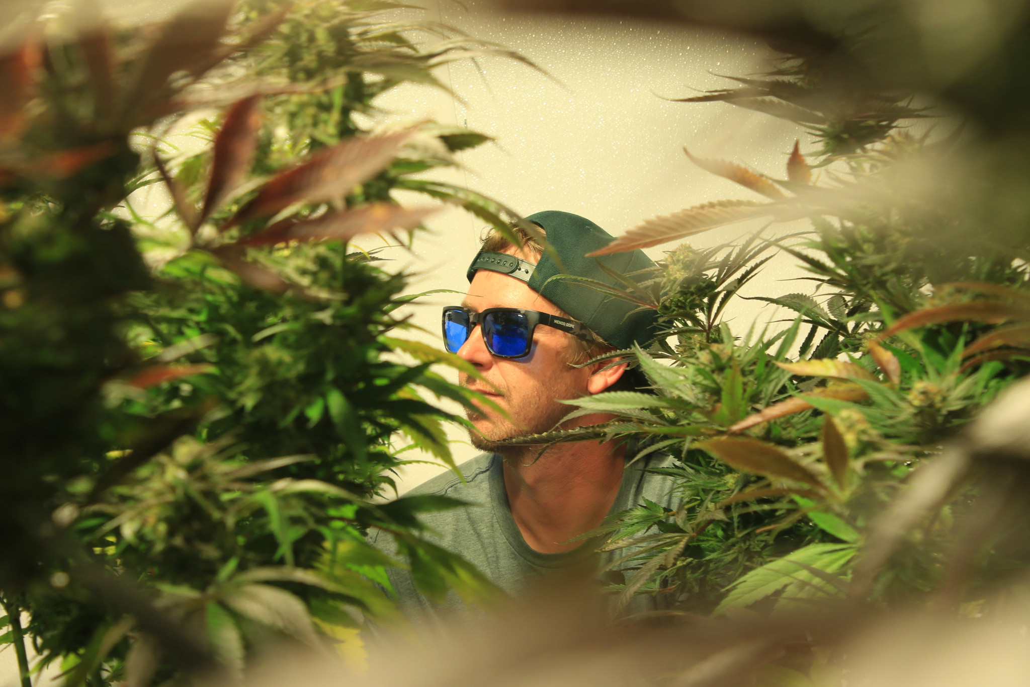 Everything Under the Sun: Buds, Rhymes & Life with Mendo Dope