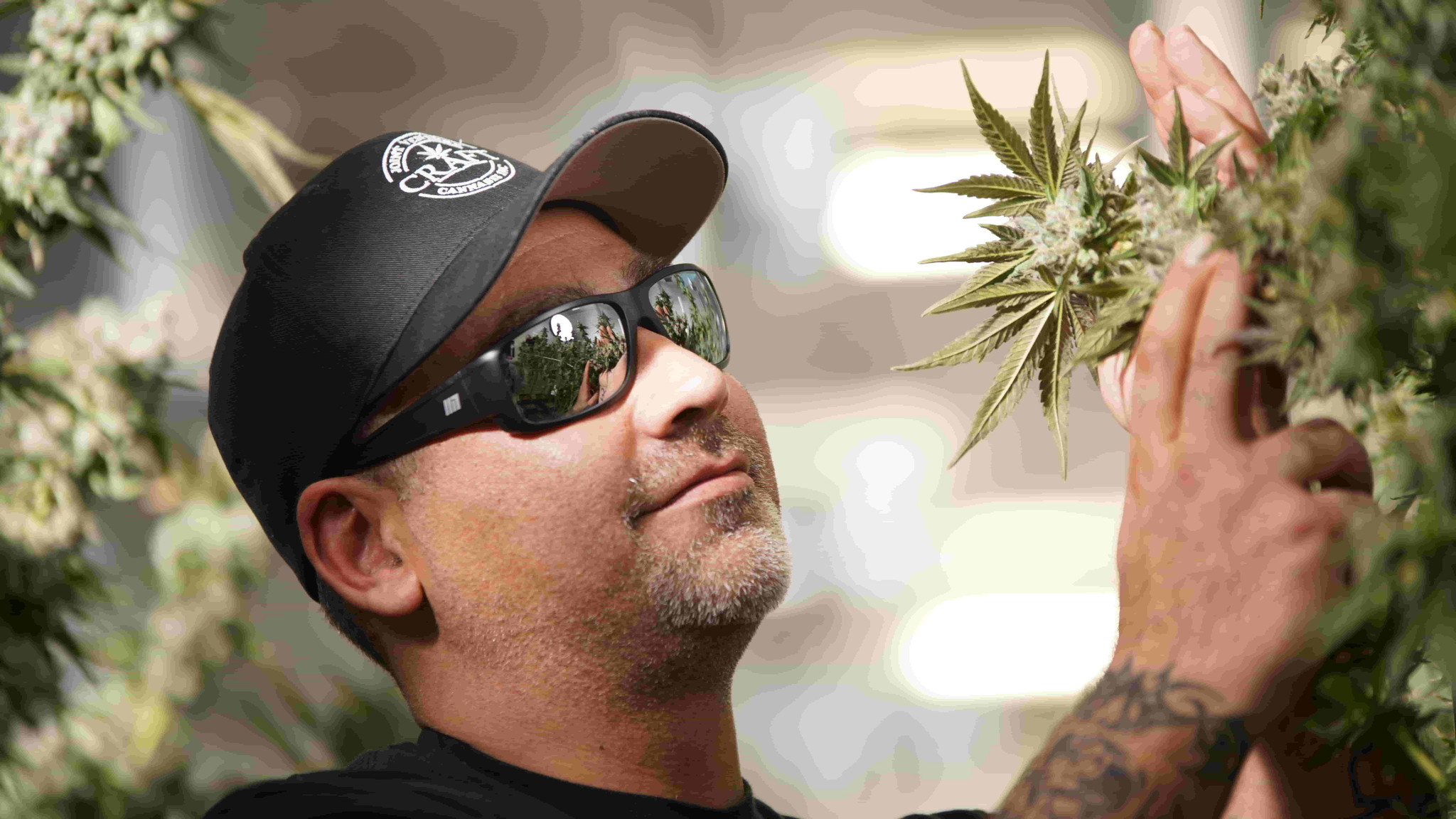 The Importance of Wearing HPS Glasses In a Grow Room