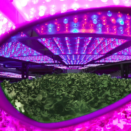 For use with Blurple LED lights