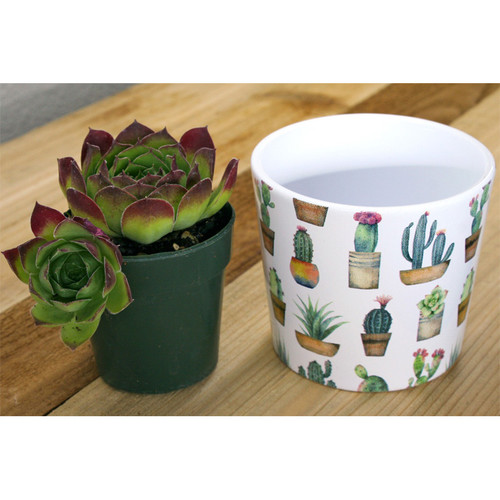 Indoor Garden Cactus Mini Pot 870-09