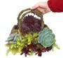 Succulent Purse Planter