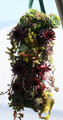 Hanging Hardy Succulent Planter