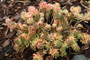 Touched in White Sedum in February