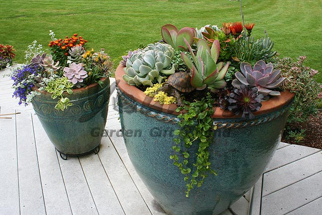 Succulent Planters with Companion Plants
