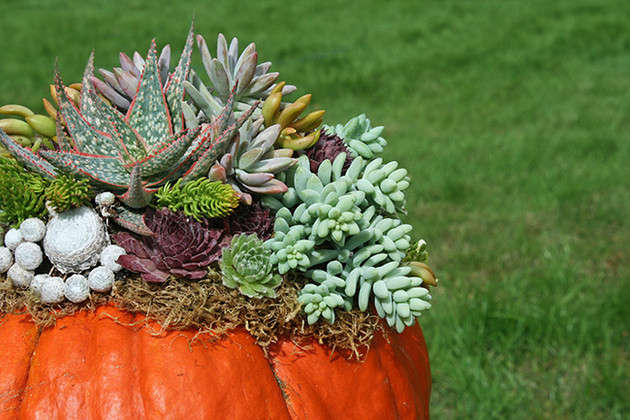 Fall Succulent Pumpkin Planter