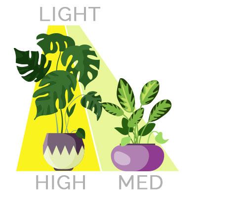 High to Medium Light Houseplants