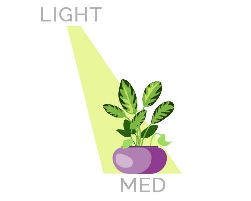 Medium Light Houseplants