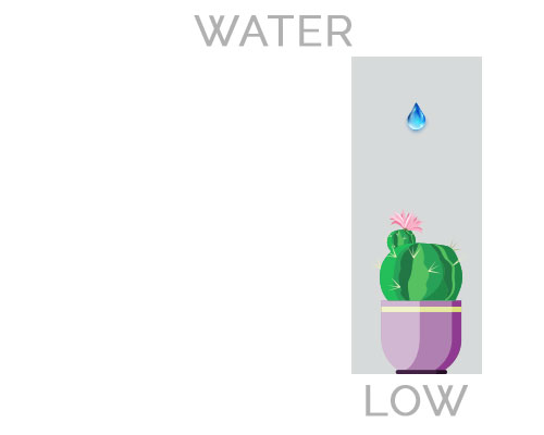 Low Water Houseplants