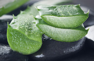 Can you put aloe vera gel on your hair?