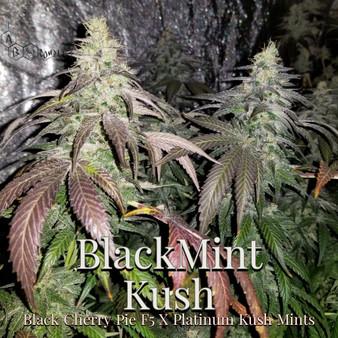 Blackmint Kush
