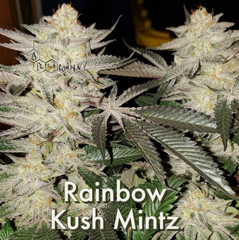 Rainbow Kush Mintz