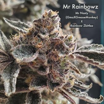 Mr. Rainbowz