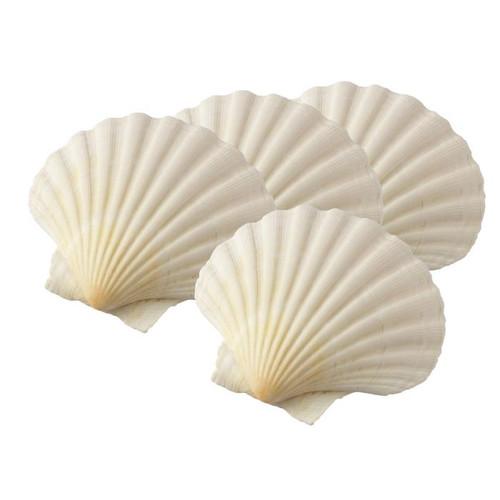 Natural  King Scallop Baking Shells
